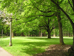 Columbia park offers lush trees and real grass, perfect for playing soccer.